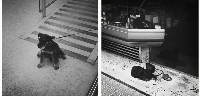 01dogswaiting_juliasolans