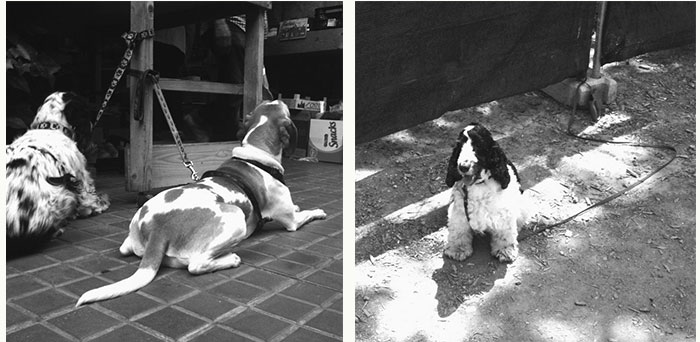 03dogswaiting_juliasolans
