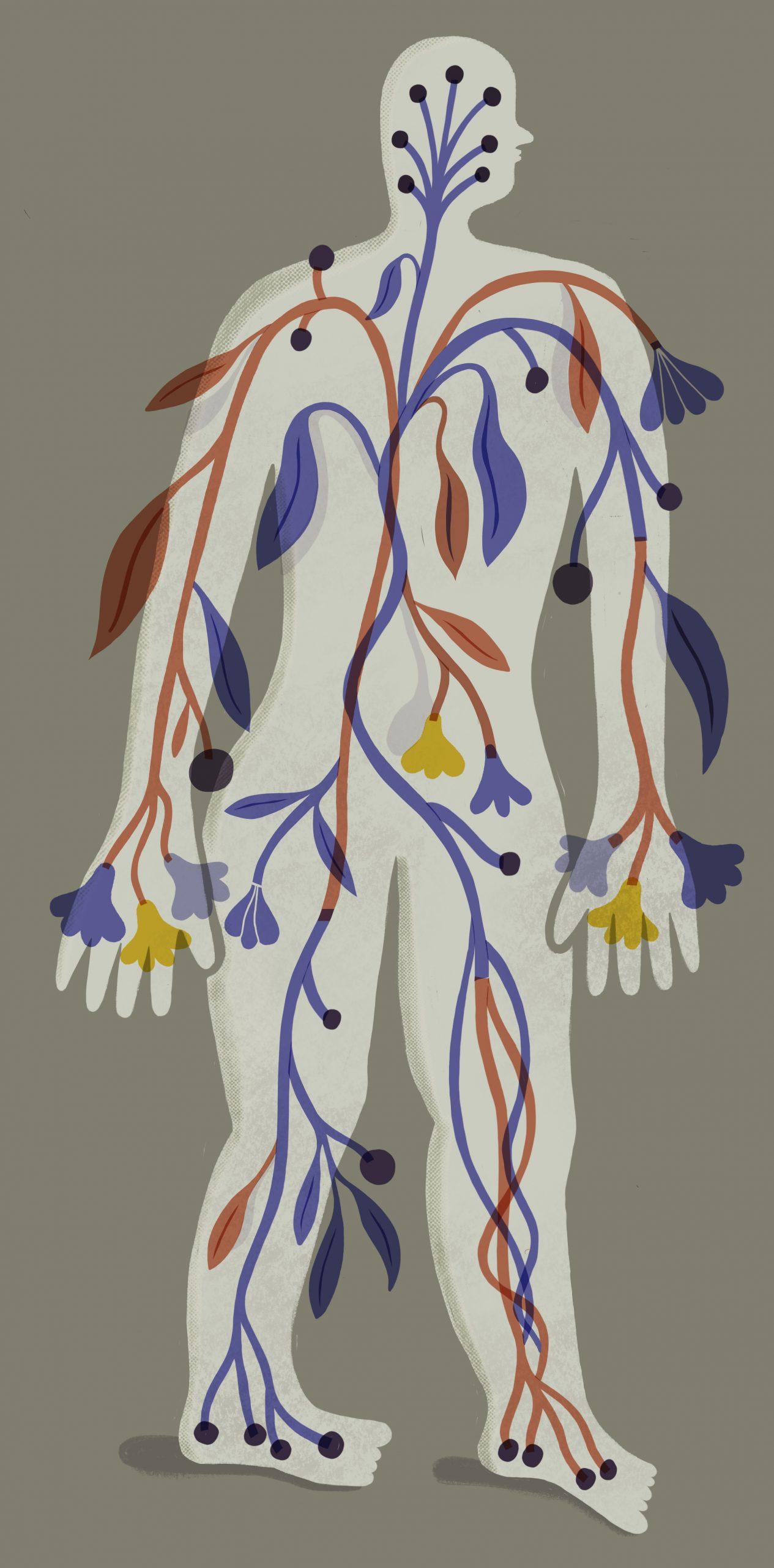 Anatomía_floral-1